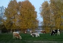 Maatilamatkaile Einolan tilalle nähdäksesi mm. länsisuomenkarjaa, itäsuomenkarjaa ja pohjoissuomenkarjaa